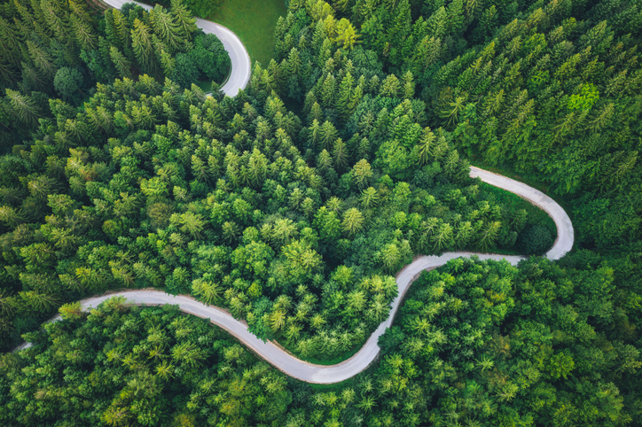 winding road through forest
